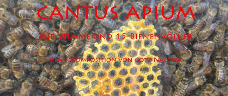 cantus apium